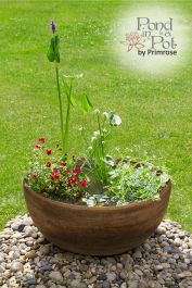 All Year Colour Pond in a Pot Kit with Brown Stone Resin 55.5cm Planter