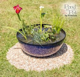 All Year Colour Pond In A Pot Kit with 55cm Pacific Blue Glaze Effect Planter