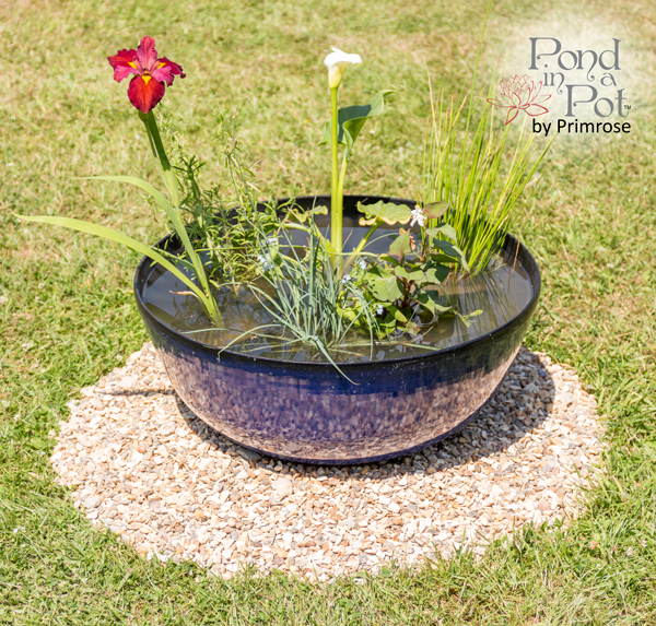 Semi Shade Pond In A Pot Kit with 55cm Pacific Blue Glaze Effect Planter