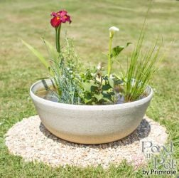 All Year Colour Pond In A Pot Kit with 55cm White Cortina Stone Effect Planter
