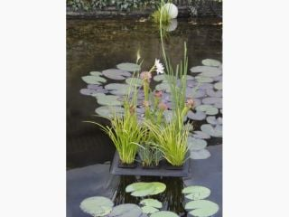 30 x 40cm Floating Oasis Pond Planter