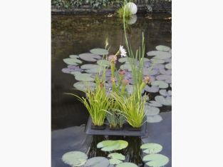 Floating Plant Oasis Pond Planter 30x40cm