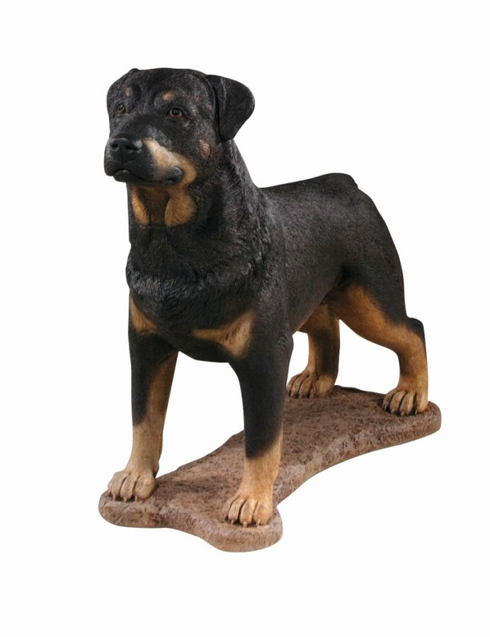 Rottweiler- Detailed Finish Cast Stone Statue H77cm x W32cm