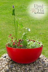 All Year Colour Pond in a Pot Kit with Red Fibreglass 72cm Planter