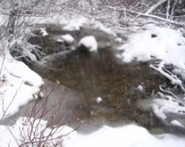 A Guide to Caring for Your Pond in Winter
