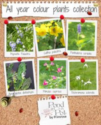 Large 72cm All Year Colour Pond Plants Collection by Pond in a Pot™