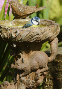 birds_taking_a_bath