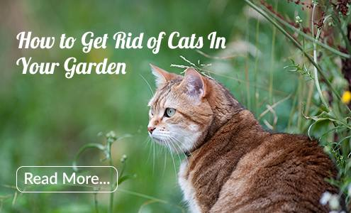 cat repellents that work