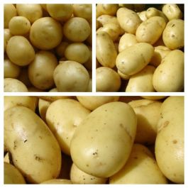 3 x 1kg Christmas Seed Potato Collection | 'Charlotte' | 'Maris Peer' | 'Nicola'