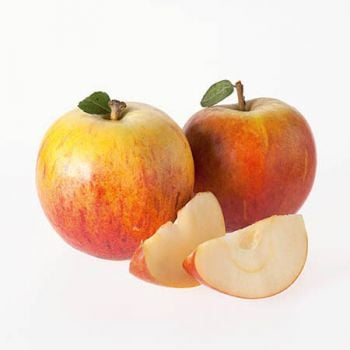 Cox's Orange Pippin' Dessert Apple Tree M26 - 9L Pot
