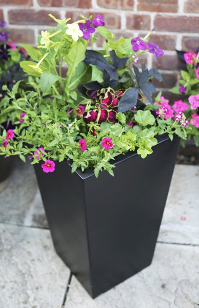 H90cm Tall Flared Square Fibreglass Planter in Matt Black - By Fibre-G�