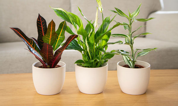 small house plant collection