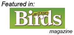 Featured in Cage & Aviary Birds