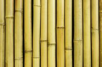 Thick White Bamboo Screening Roll - 1.9m x 1.8m