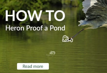 how to heron proof a pond