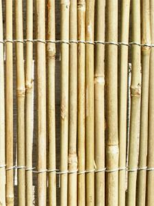 Bamboo Cane Screening