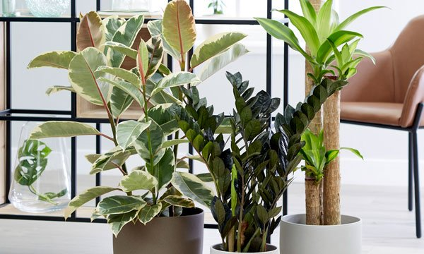 large house plant collection