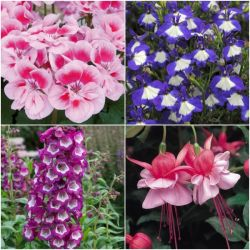 90 x Colourful Landcape Bedding Plant Collection | Hand-Picked Jumbo Plug Plants