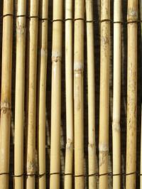4.0m x 1.2m Peeled Reed Natural Fencing and Screening by Papillon™