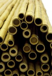Thick Bamboo Screening Rolls From 163 22 99