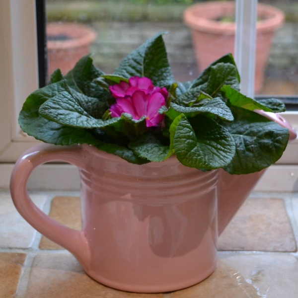 Pink Ceramic Watering Can with Primrose