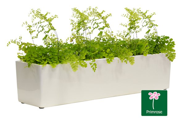 L70cm Gloss Fibreglass Window Box Planter in White - By Primrose™