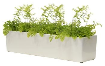L76cm Gloss Fibreglass Window Box Planter in White - By Primrose®