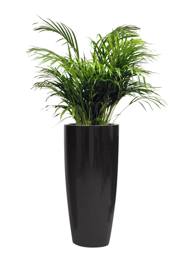 H88cm Tall Round Fibreglass Gloss Planter In Black By