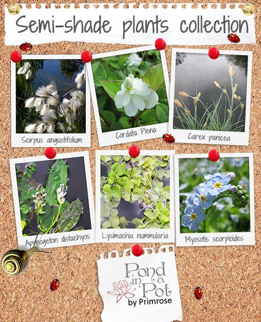 Small 55cm Semi-Shade Pond Plants Collection by Pond in a Pot™