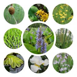 Large Wildlife Collection Pond Plant Collection 4x 3L Pots