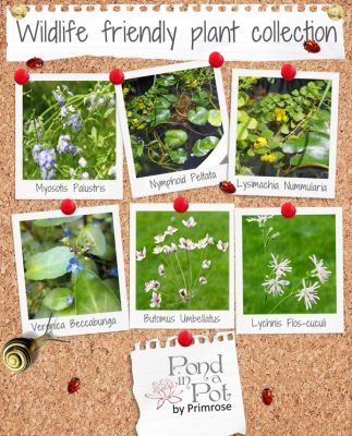 Wildlife Friendly Pond Plants Collection by Pond in a Pot™